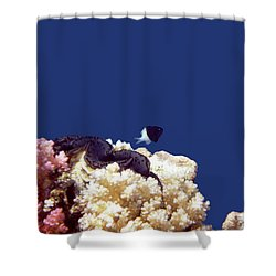 Gorgeous Red Sea World 4 Shower Curtain