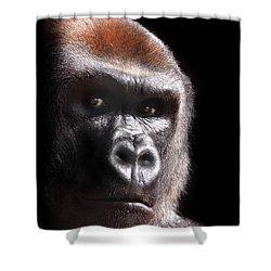 Gorilla ... Kouillou Shower Curtain by Stephie Butler
