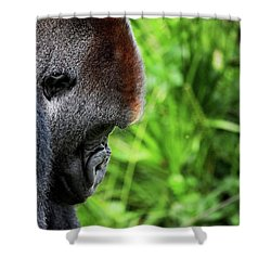 Gorilla Portrait Shower Curtain by Dan Pearce