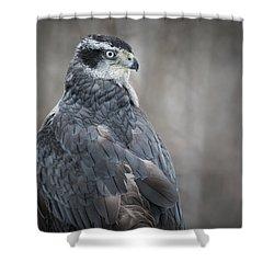 Goshawk Shower Curtain by Angie Rea