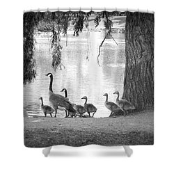 Goslings Bw7 Shower Curtain by Clarice Lakota