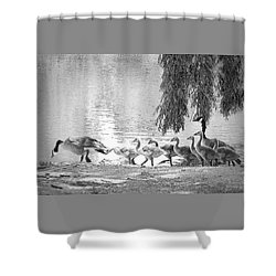 Goslings Bw8 Shower Curtain by Clarice Lakota