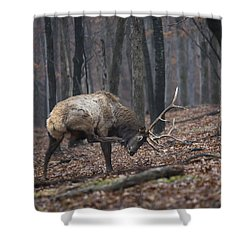 Shower Curtain featuring the photograph Got A Scratch by Andrea Silies