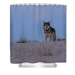 Got You Covered Shower Curtain
