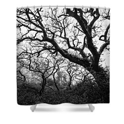 Gothic Woods II Shower Curtain