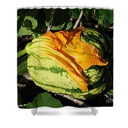 Shower Curtain featuring the photograph Gourd  by J L Zarek