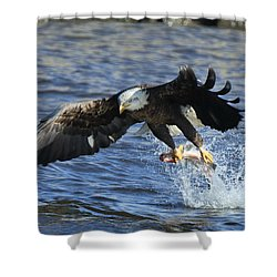 Shower Curtain featuring the photograph Grabbing Some Dinner by Coby Cooper