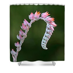 Graceful Shower Curtain by Elvira Butler
