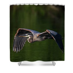 Shower Curtain featuring the photograph Graceful Flight by Everet Regal