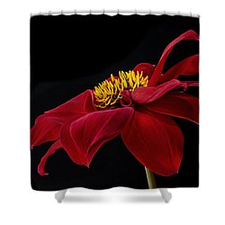 Shower Curtain featuring the photograph Graceful Red by Roman Kurywczak