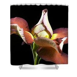 Graceful Rose Petals Shower Curtain by Elsa Marie Santoro