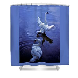 Shower Curtain featuring the photograph Graceful Swans by Marie Hicks