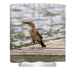 Grackle On A Dock Shower Curtain