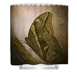 Shower Curtain featuring the photograph Graffic Owl Butterfly by Inge Riis McDonald