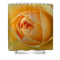 Shower Curtain featuring the photograph Graham Thomas Old Fashioned Rose by Jocelyn Friis