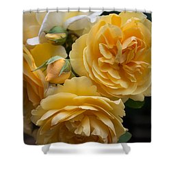 Graham Thomas Rose Shower Curtain