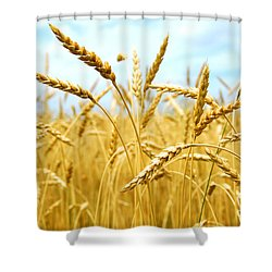 Grain Field Shower Curtain by Elena Elisseeva
