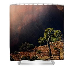 Grand Canyon Juniper Shower Curtain