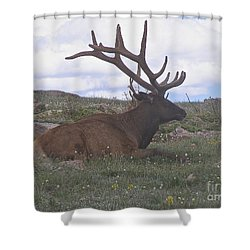 Grand Dad  Shower Curtain by Alan Johnson