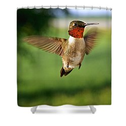 Grand Display Shower Curtain by Bill Pevlor