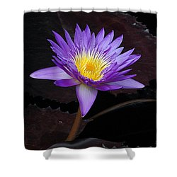 Shower Curtain featuring the photograph Grand Entrance by Byron Varvarigos