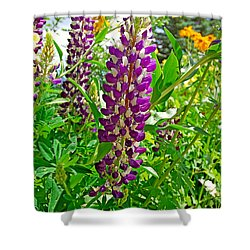 Grand Lake Purple Shower Curtain