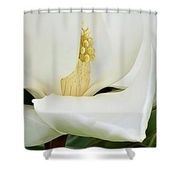 Grand Magnolia Shower Curtain