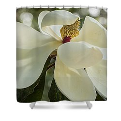 Shower Curtain featuring the photograph Grand Magnolia  by Julie Andel