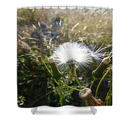 Grand Manan Dandelion  Shower Curtain by Joel Deutsch