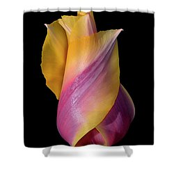 Grand Opening - Purple And Yellow Tulip 001 Shower Curtain