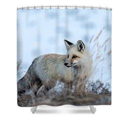 Grand Teton Fox Shower Curtain