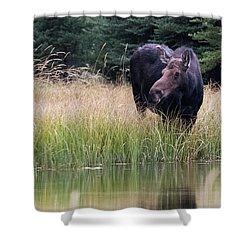 Grand Teton Moose Shower Curtain