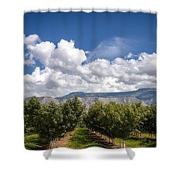 Grand Valley Orchards Shower Curtain by Teri Virbickis