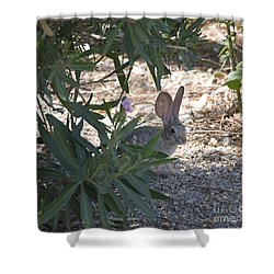 Grandma What Big Ears You Have Shower Curtain by Anne Rodkin