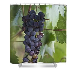 Grape Fruit Shower Curtain
