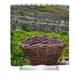 Grape Harvest Shower Curtain by Gaspar Avila