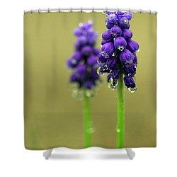 Grape Hyacinth Shower Curtain by Joseph Skompski