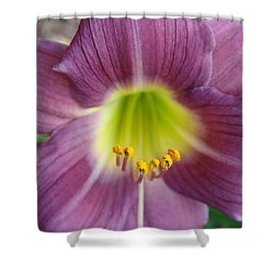 Shower Curtain featuring the photograph Grape Purple Daylilies  by Rebecca Overton