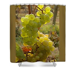 Grape Spiral Shower Curtain