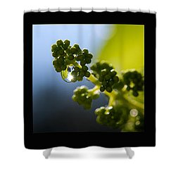 Grape Vines And Water Drops Triptych Shower Curtain by Lisa Knechtel
