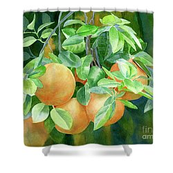Grapefruit With Background Shower Curtain