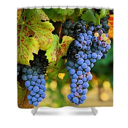 Shower Curtain featuring the photograph Grapes Grapes Grapes by Lynn Hopwood
