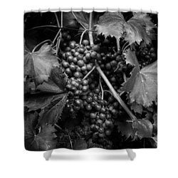 Grapes In Black And White Shower Curtain