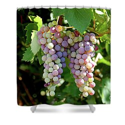 Shower Curtain featuring the photograph Grapes In Color  by Frank Stallone
