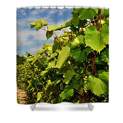 Grapes In The Michigan Vineyard Shower Curtain by Diane Lent