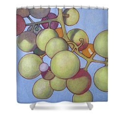 Grapes No.8 Shower Curtain