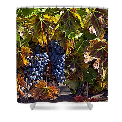 Grapes Of The Napa Valley Shower Curtain by Garry Gay
