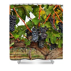 Shower Curtain featuring the photograph Grapes Of The Yakima Valley by Lynn Hopwood