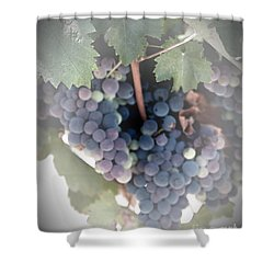 Grapes On The Vine I Shower Curtain
