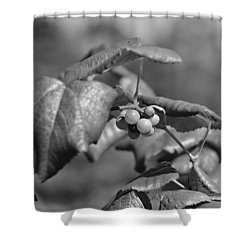 Grapes On The Vine  Shower Curtain